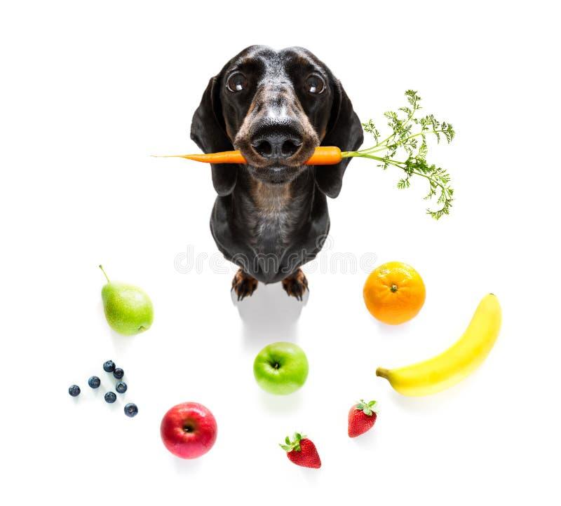 饥饿的狗用素食主义者健康果子 免版税库存照片