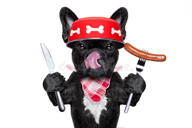 饥饿的狗碗 免版税库存图片