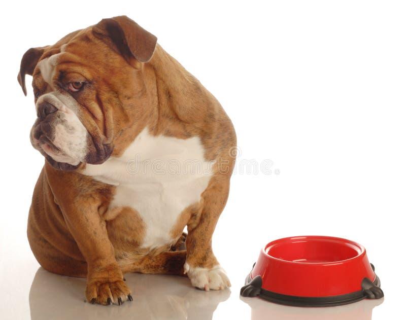 饥饿的狗 图库摄影