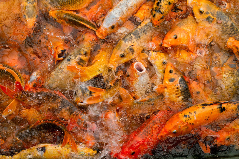 饥饿的鱼 免版税库存照片
