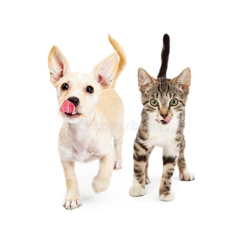 饥饿的今后走小猫和的小狗 库存照片