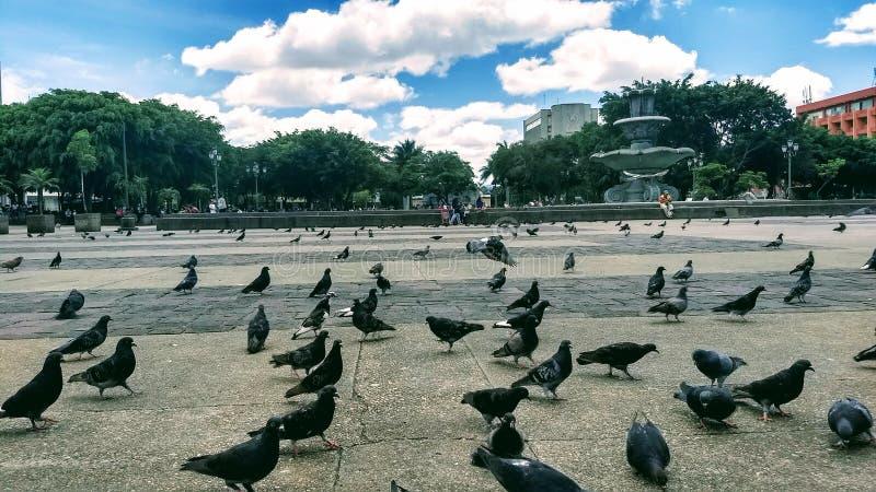 饥饿攻击的鸟 免版税图库摄影
