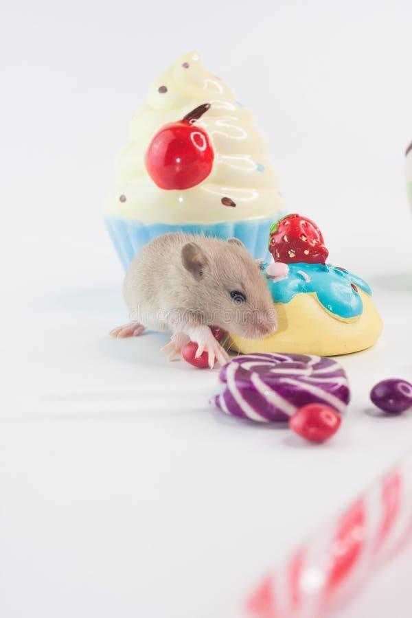 饮食的概念 在甜点背景的老鼠  图库摄影