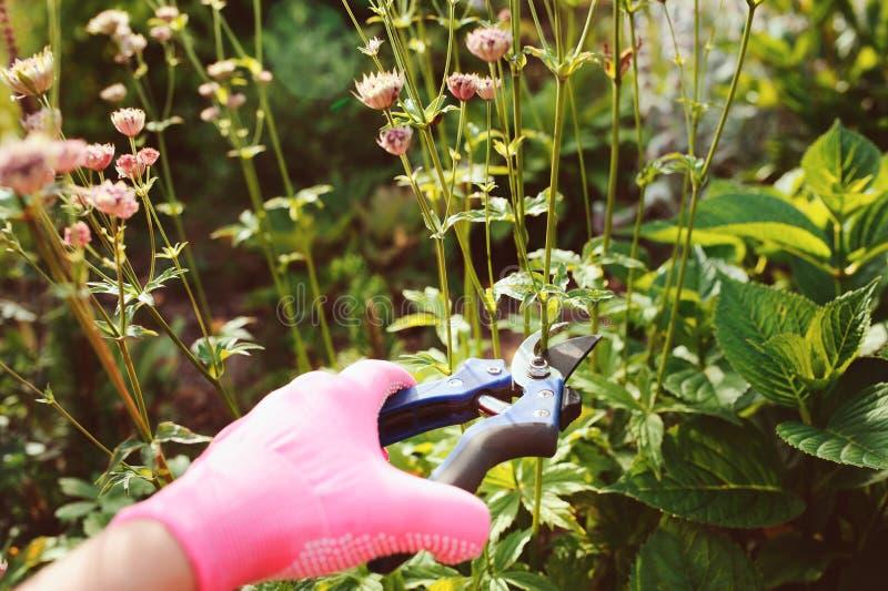 饰物多年生植物在开花以后 图库摄影