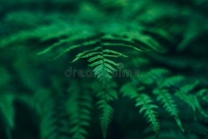 饱和的绿色蕨丛林在夏天森林里 免版税库存图片