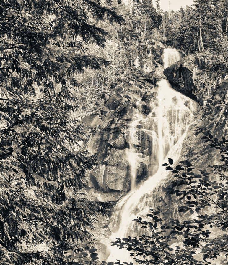 香农跌倒省公园, Squamish,加拿大 库存图片