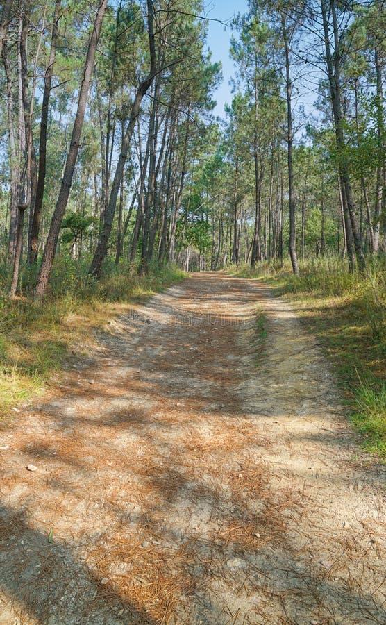 香客足迹, Camino de圣地亚哥,西班牙 图库摄影