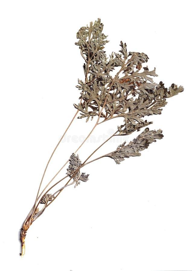 香料和草本 香料和地中海草本品种  r 库存照片