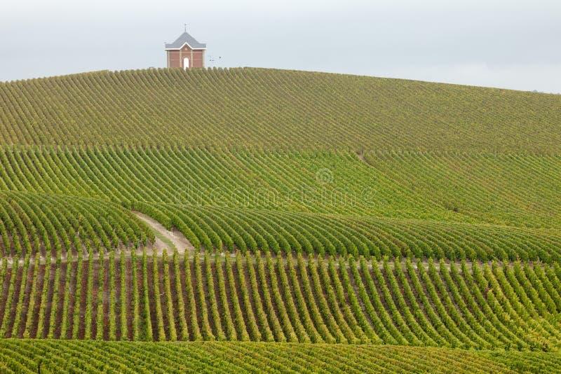 香槟葡萄园 免版税库存照片