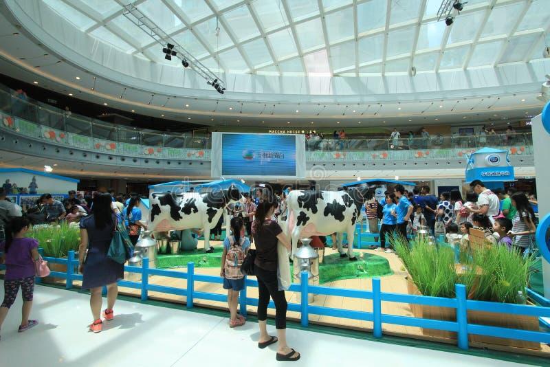 2015年香港荷兰Pure夫人畜牧业农厂事件 库存照片