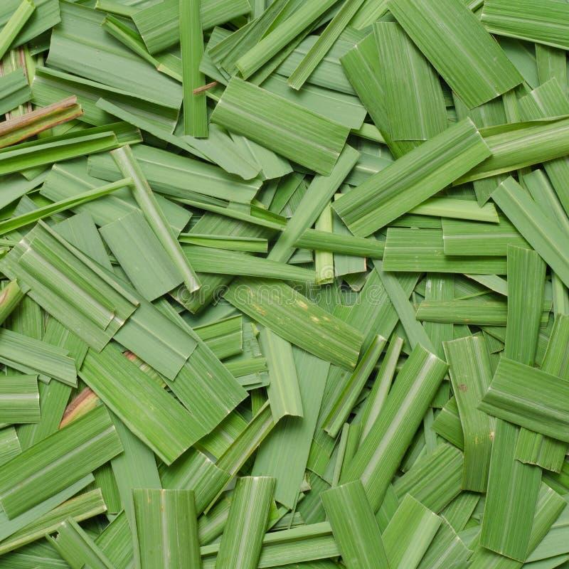 香茅油草叶子 库存照片
