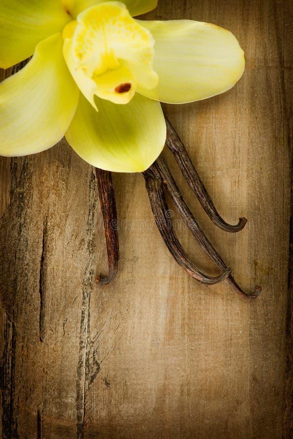 香草荚和花 免版税库存照片