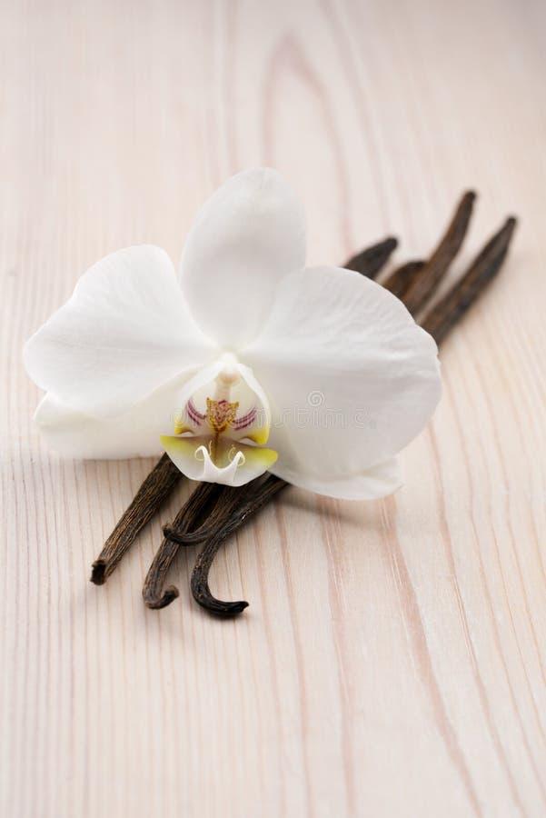 香草荚和花 库存图片