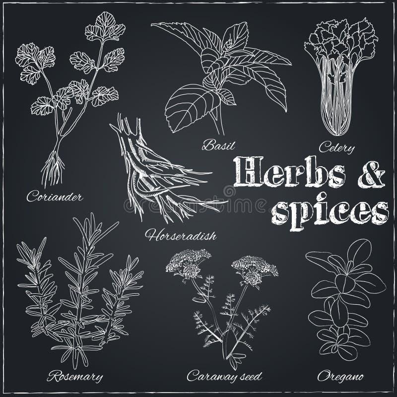 香菜,蓬蒿,芹菜,辣根,迷迭香,葛缕子籽, o 皇族释放例证