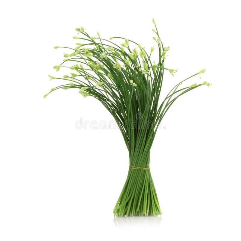 香葱开花或在白色背景隔绝的中国香葱 库存图片
