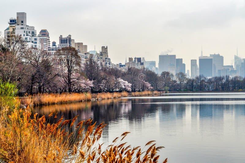 香蒲和春天开花在中央公园排行水库 免版税库存照片