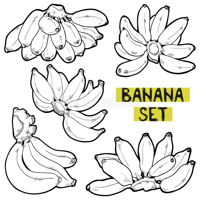 香蕉传染媒介集合 向量例证