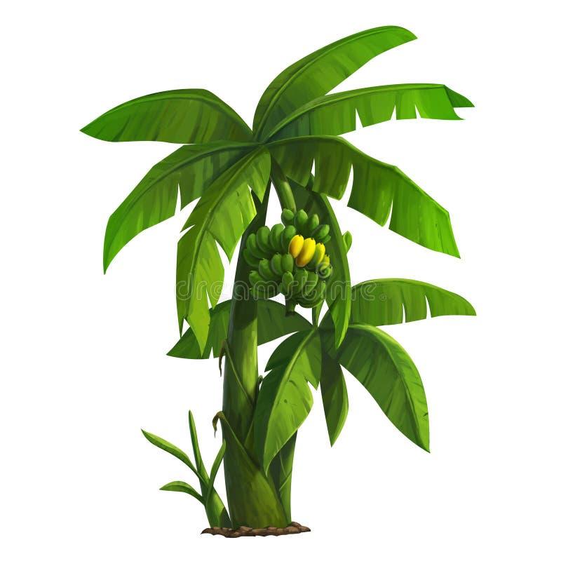 香蕉大明亮的接近的绿色留下结构树 库存例证