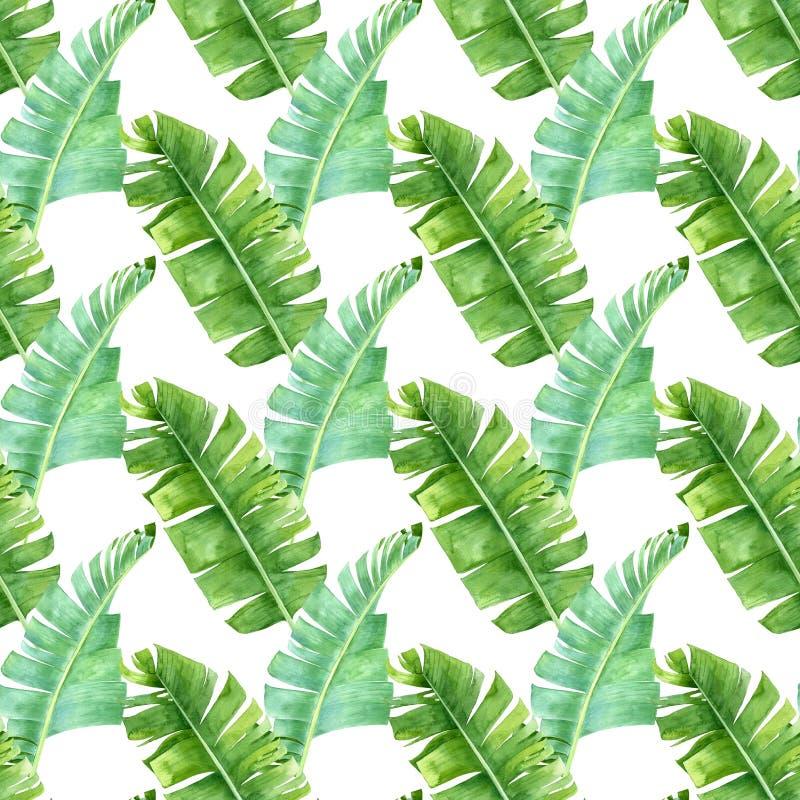 香蕉棕榈叶无缝的样式 图库摄影