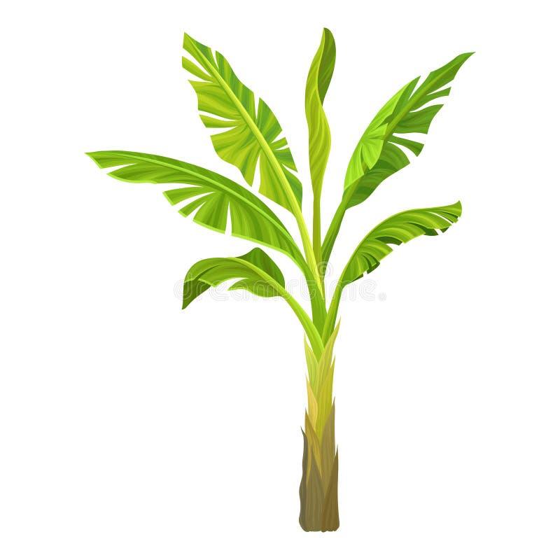 香蕉棕榈的动画片例证 与大鲜绿色的叶子的树 热带的工厂 图形设计元素为 库存例证