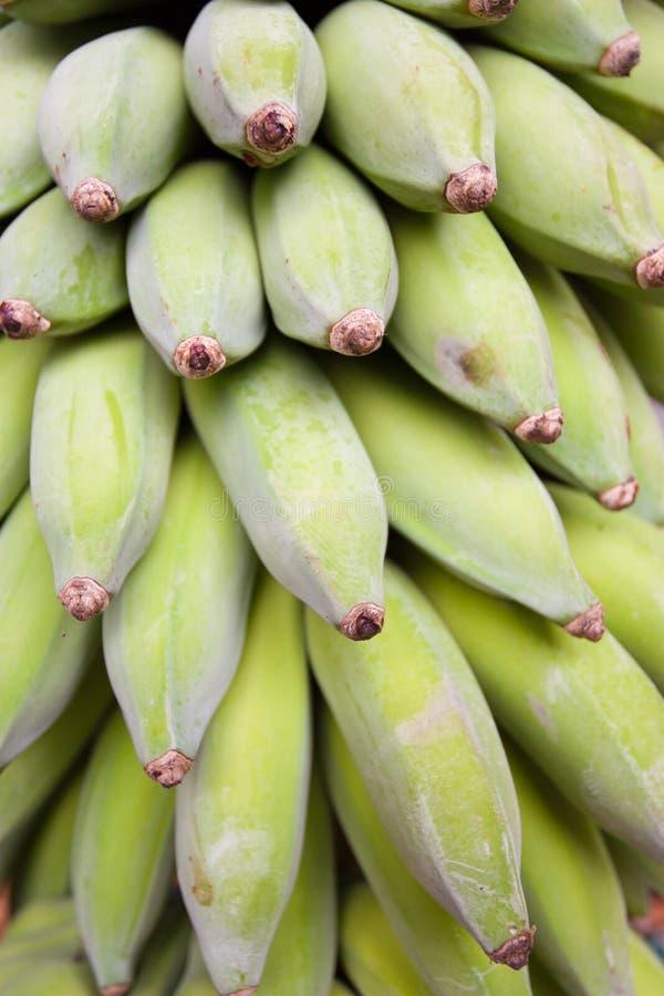 香蕉灌木 免版税图库摄影