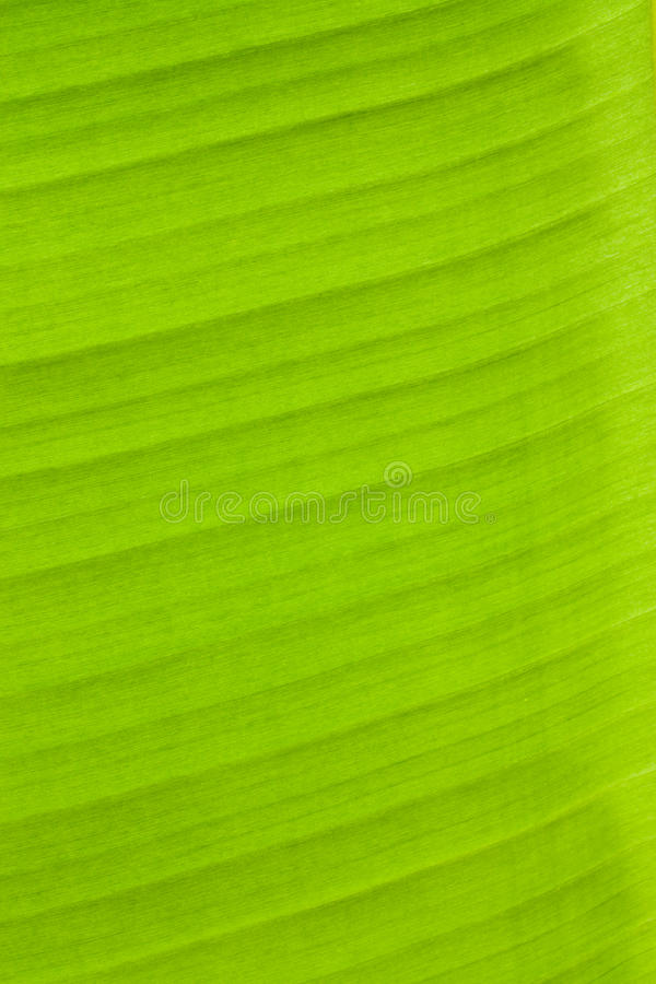 香蕉绿色叶子 免版税库存图片