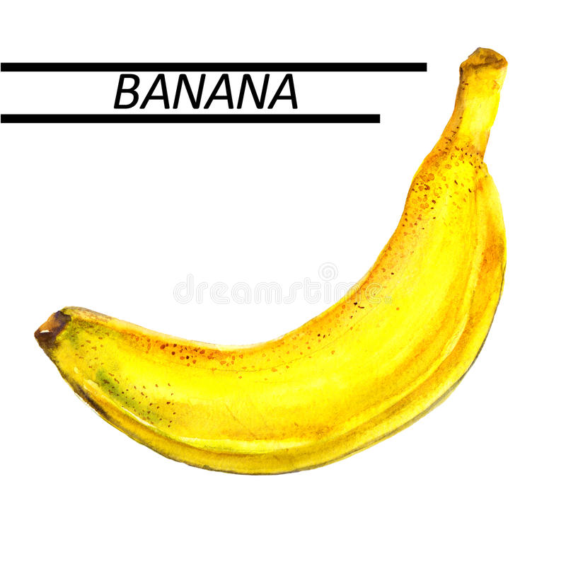 香蕉水彩 在白色背景的手拉的水彩绘画 皇族释放例证