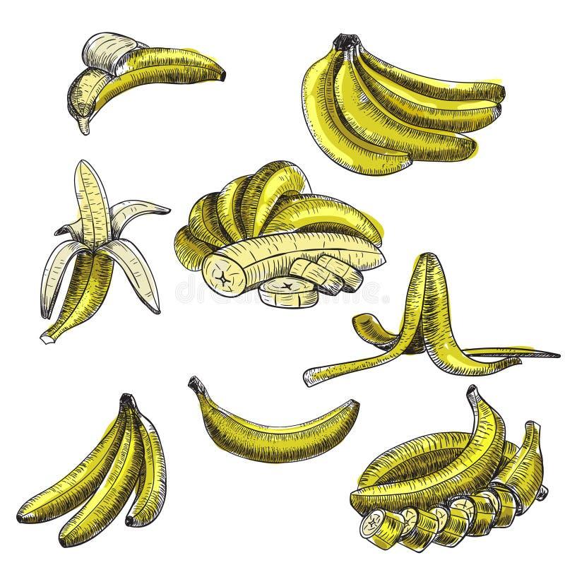 香蕉 设置草图向量 详细的柑橘图画 葡萄酒剪影样式例证 向量例证