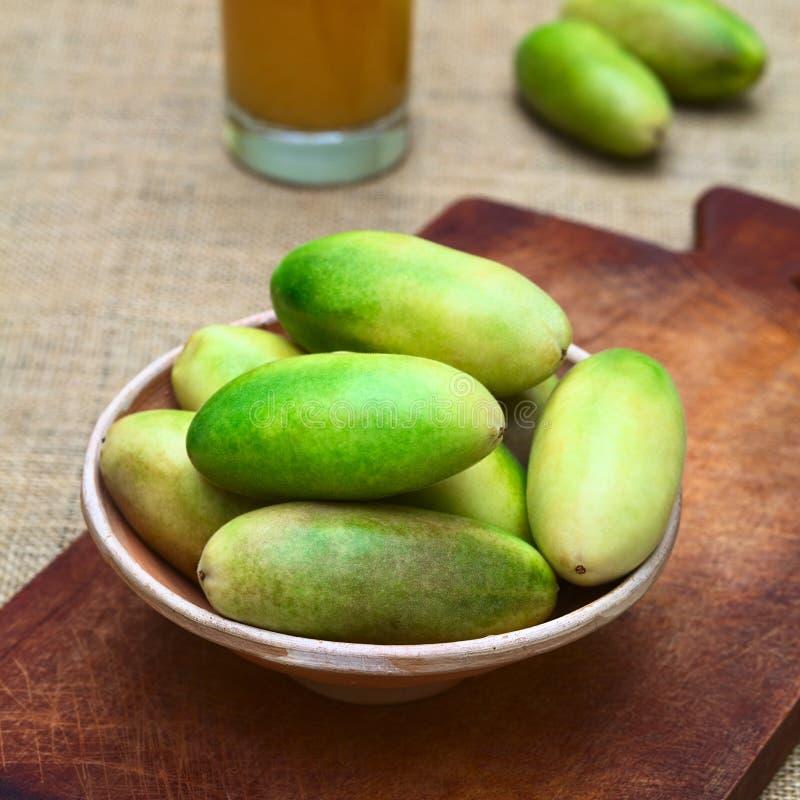 香蕉Passionfruit (拉特 西番莲Tripartita) 免版税库存照片