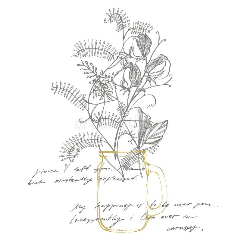 香豌豆花与线艺术的花画和剪影在白色背景 植物的植物例证 ?? 库存例证
