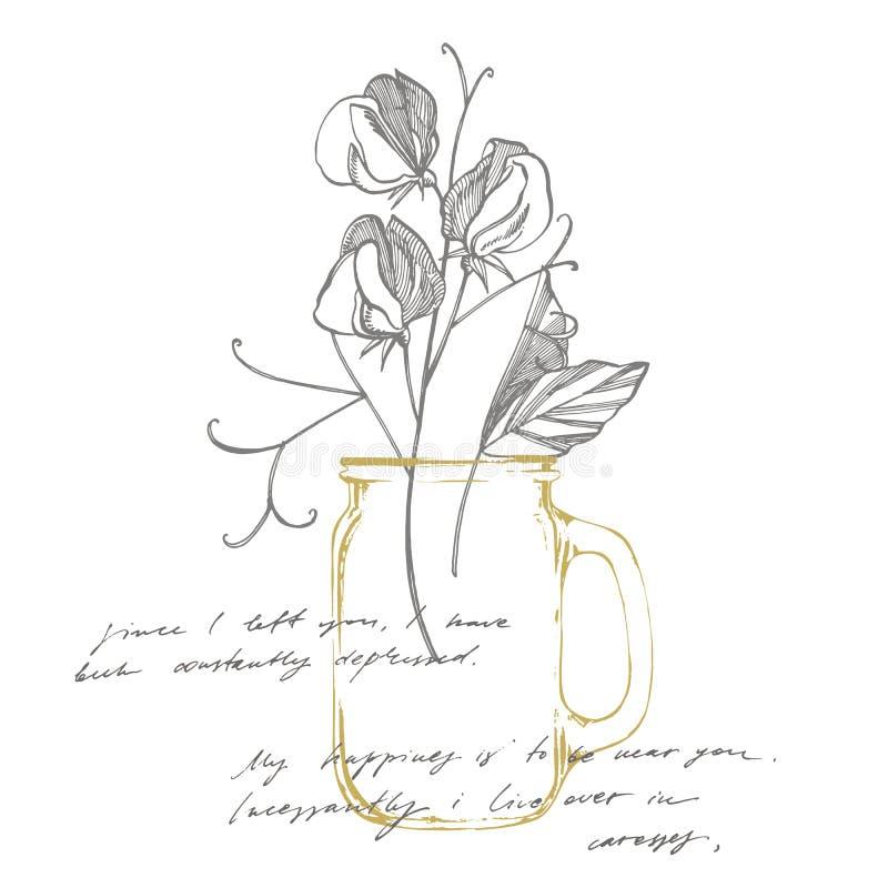 香豌豆花与线艺术的花画和剪影在白色背景 植物的植物例证 ?? 向量例证
