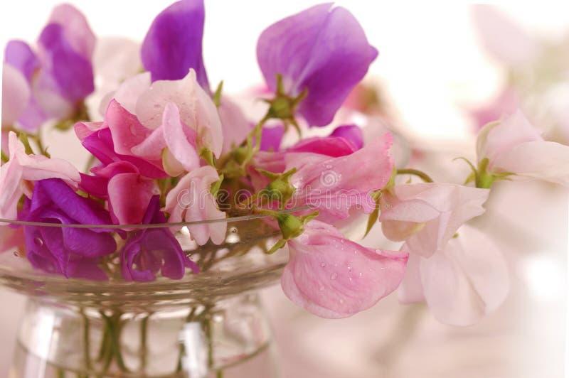 香豌豆花花 库存照片