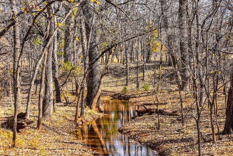 马丁秋天的自然公园 库存图片