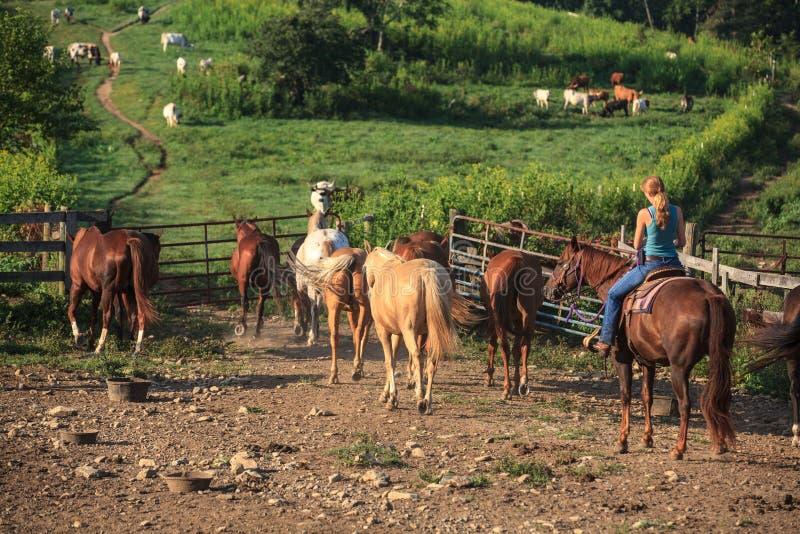 马农场的工作的女牛仔 免版税库存图片