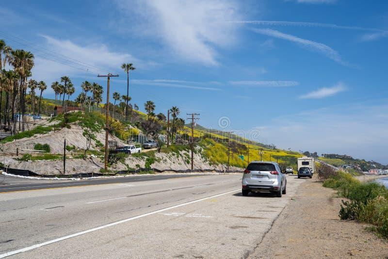 马利布,加利福尼亚- 2019年3月26日:太平洋海岸高速公路在马利布充满黄色野花,在再生物从 库存图片