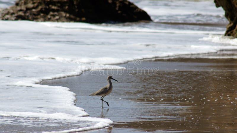 马利布,美国- 2014年10月9日:美丽和浪漫El斗牛士国家海滩在南加州 库存照片