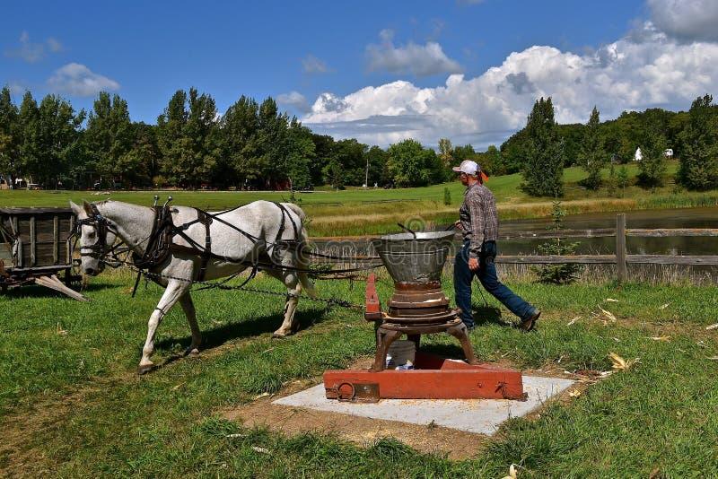 马力提供能量操作一台老玉米脱壳器 免版税库存图片