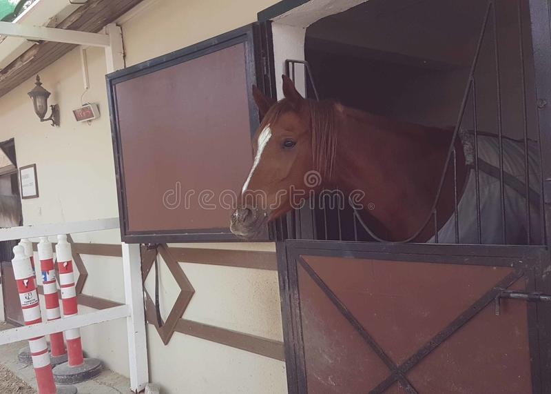 马厩马掌棕色骑马步步高 库存照片