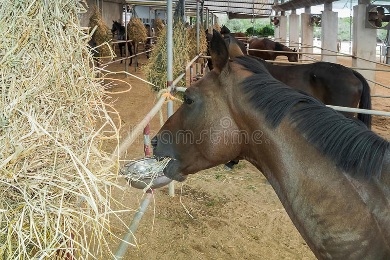 马和哺养 免版税图库摄影