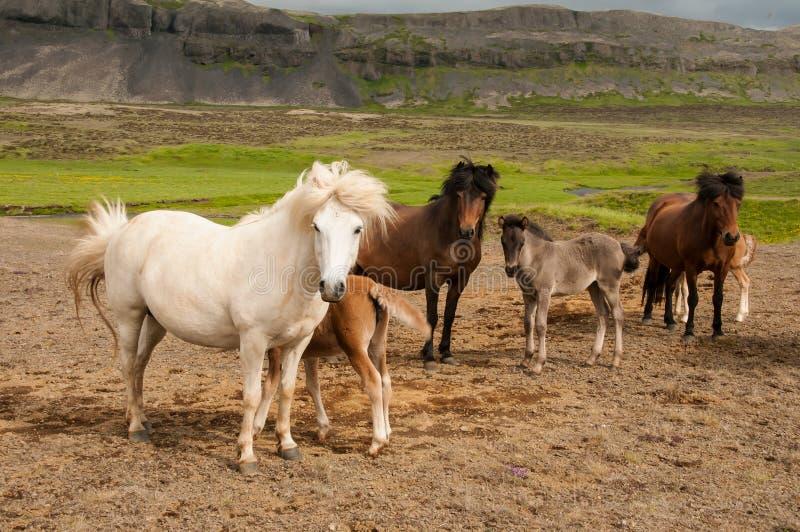 马和她小的驹 免版税图库摄影