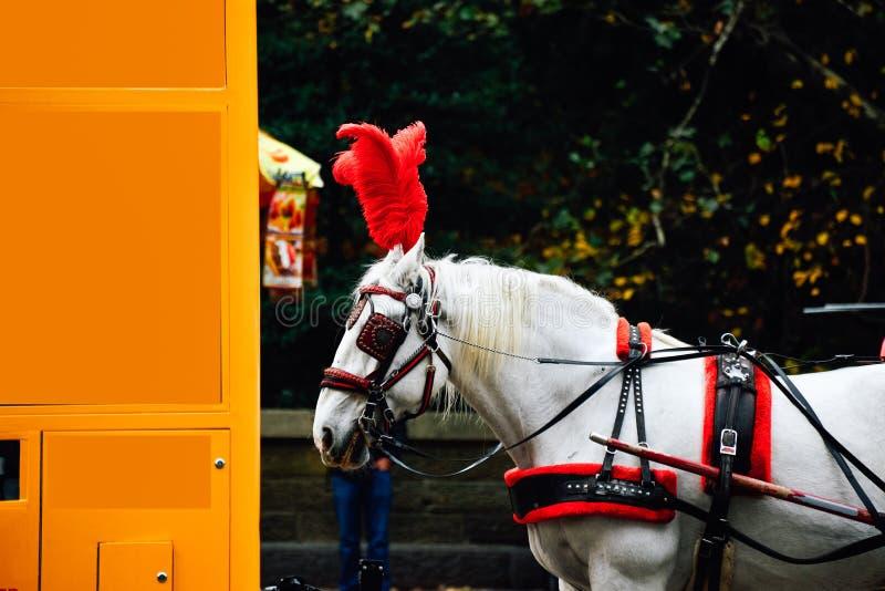 马和支架乘驾在中央公园纽约 库存图片