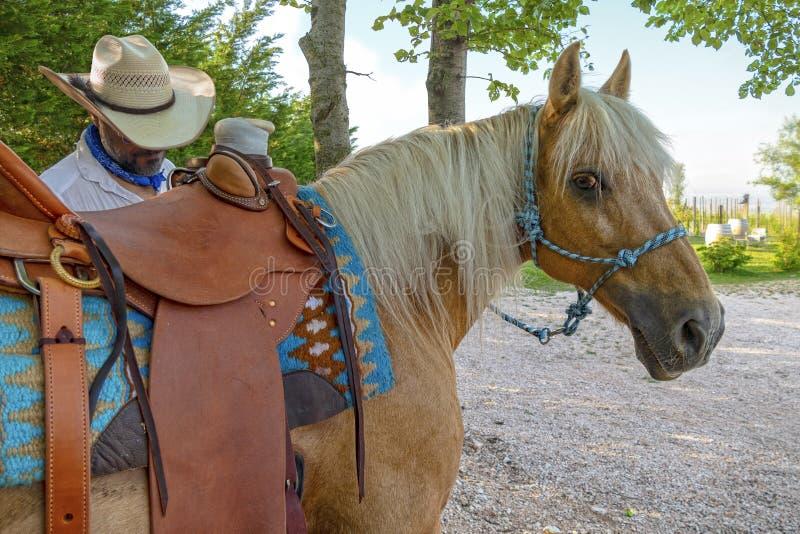 马和牛仔 库存照片