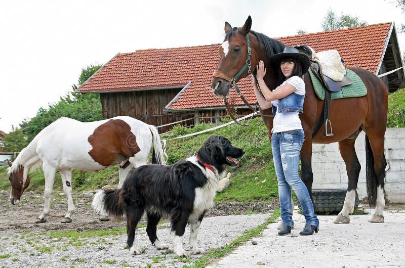 马和狗 库存图片