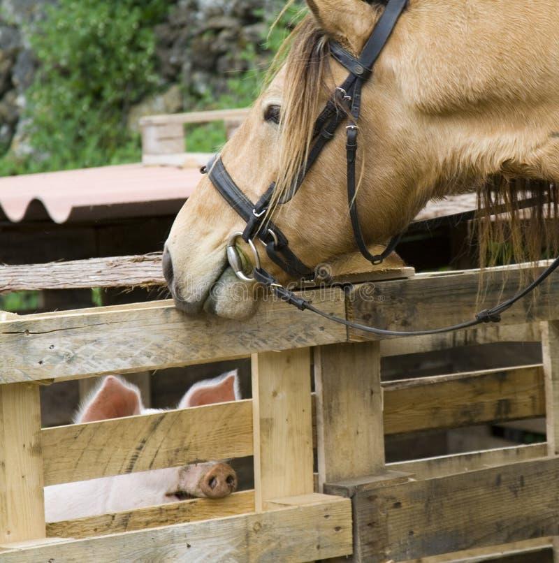 马和猪 免版税库存照片