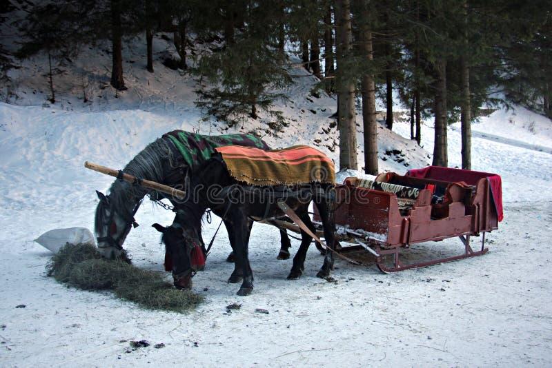 马和雪橇支架在冬天 免版税库存照片