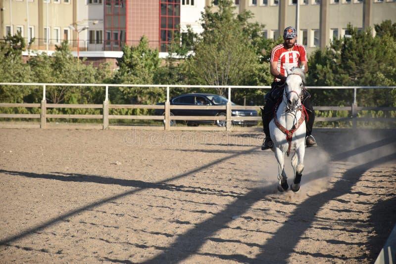 马和骑师 免版税图库摄影