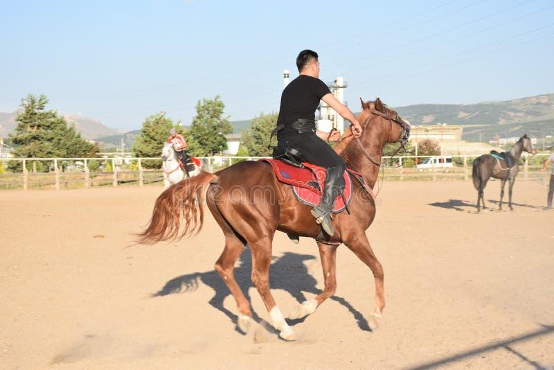 马和骑师 库存照片