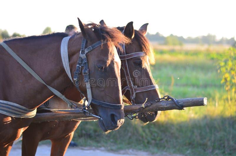 马在乡下 免版税库存图片