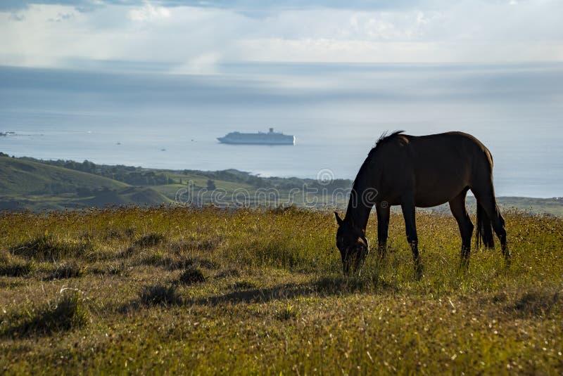 马在复活节岛 免版税库存图片