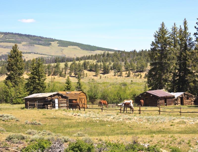 马在大农场畜栏 免版税库存照片